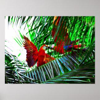 Poster Deux oiseaux de perroquet jouant dans les