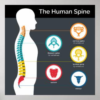 Poster Diagramme humain d'anatomie d'épine