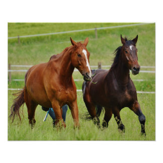 Poster Doubles chevaux