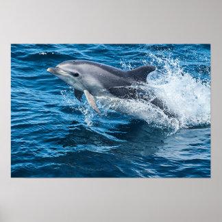 Poster Éclaboussement de dauphin