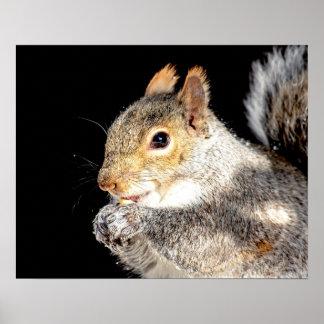Poster écureuil 20x16 mangeant un écrou