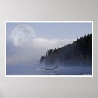 Poster Épaulard d'orque et art superbe de faune de lune
