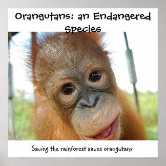 Poster Espèces de faune mises en danger par orang-outan