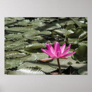 Poster Étang de fleur de Lotus de zen