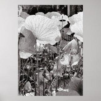 Poster Étang de Lotus, photographie noire et blanche