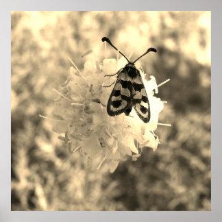 Poster Fermez-vous vers le haut du papillon sur une fleur