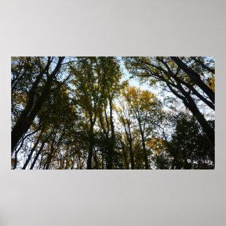 Poster Feuille d'automne dans la nature du matin I le