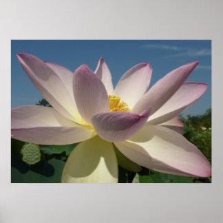 Poster Fleur de Lotus et ciel bleu I