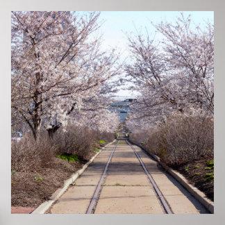 Poster Fleurs de cerisier et voies Philadelphie