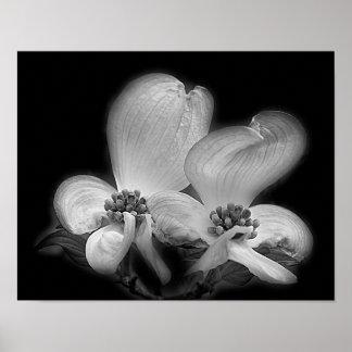 Poster Fleurs de cornouiller en noir et blanc