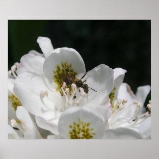 Poster Fleurs et abeilles
