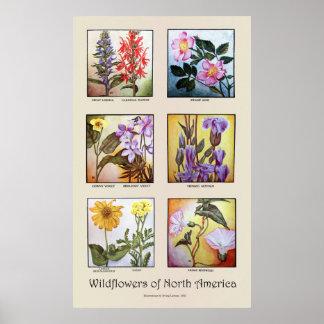 Poster Fleurs sauvages de l'Amérique du Nord [A]