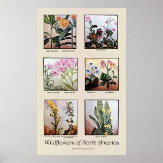 Poster Fleurs sauvages de l'Amérique du Nord [C]
