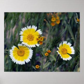 Poster Fleurs sauvages jaunes et tournesols blancs