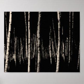 Poster Forêt d'arbre de bouleau dans la sépia