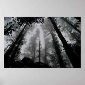 Poster Forêt déplaisante