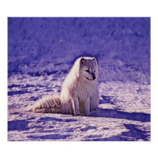 Poster Fox arctique