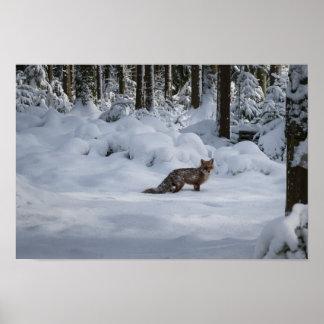 Poster Fox dans la neige