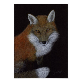 Poster Fox rouge