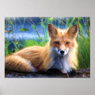 Poster Fox rouge s'étendant dans l'image de faune d'herbe