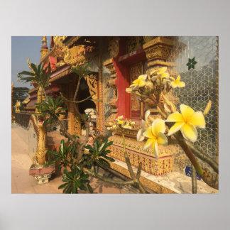Poster Frangipani en Thaïlande