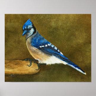 Poster Geai bleu sur le conducteur d'oiseau