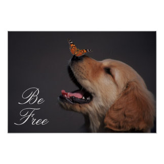Poster Golden retriever avec le papillon sur son nez