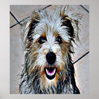 Poster Gorge d'art de bruit d'Imaal Terrier