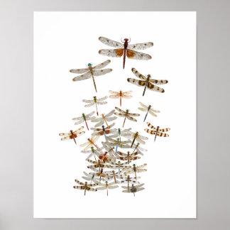 Poster Grand essaim des libellules