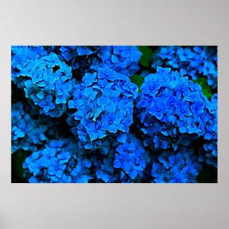 Poster Grande affiche bleu-foncé de photographie