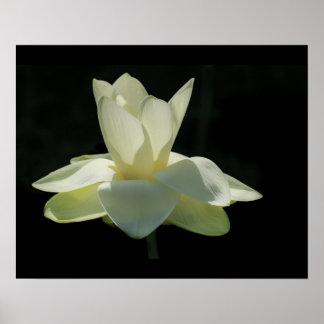Poster Grande affiche de fleur de Lotus blanc