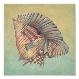 Poster Grande conque en pastel Shell