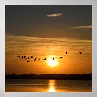 Poster Grands hérons au coucher du soleil