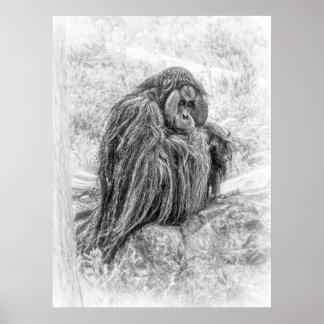Poster Homme de la forêt (orang-outan)