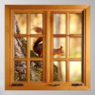 Poster Illusion carrée de fenêtre de Faux - écureuil