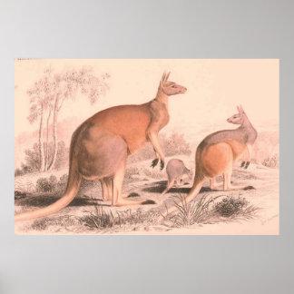 Poster Illustration vintage de famille de kangourou