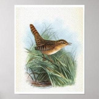 Poster Illustration vintage d'oiseau de roitelet de carex
