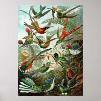 Poster Image extraordinaire de colibris par Ernst Haeckel