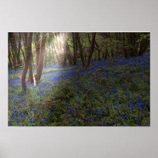 Poster Jacinthe des bois Angleterre en bois Sunbeam