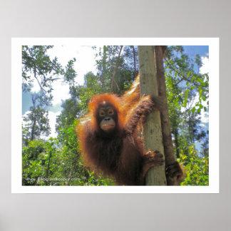 Poster Jungle de l'Indonésie d'animaux sauvages