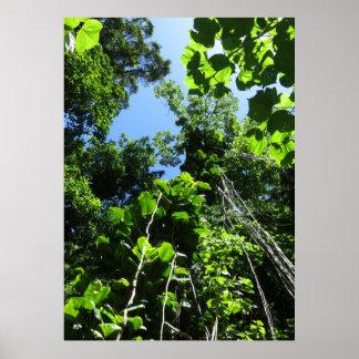 Poster Jungle hawaïenne