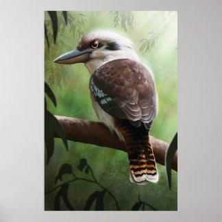 Poster Kookaburra