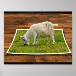 Poster La chèvre de pâturage