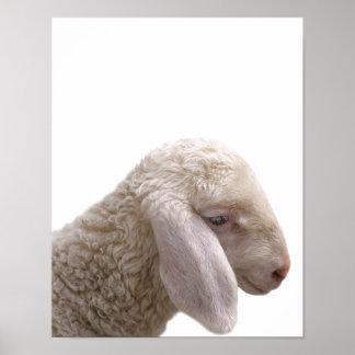 Poster La crèche de photo d'animal de ferme de moutons