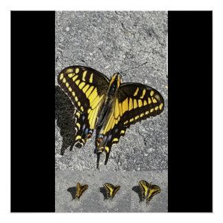 Poster La danse du papillon