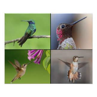 Poster La vie de colibris d'affiche
