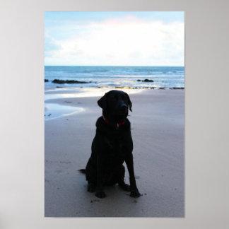 Poster Labrador noir sur une plage