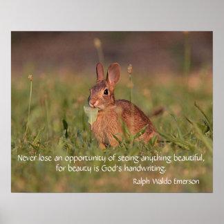 Poster Lapin de lapin