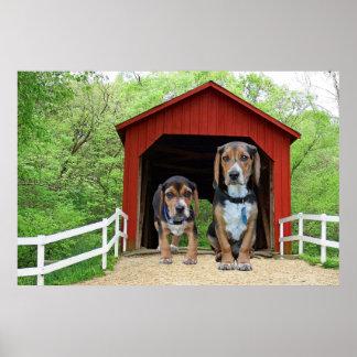 Poster Le beagle traque le pont couvert de crique de
