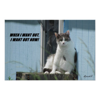 Poster Le chat casse la porte grillagée